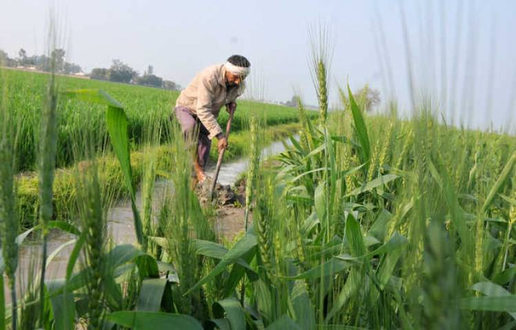 Farmer suicides, unemployment biggest issue in Rajasthan