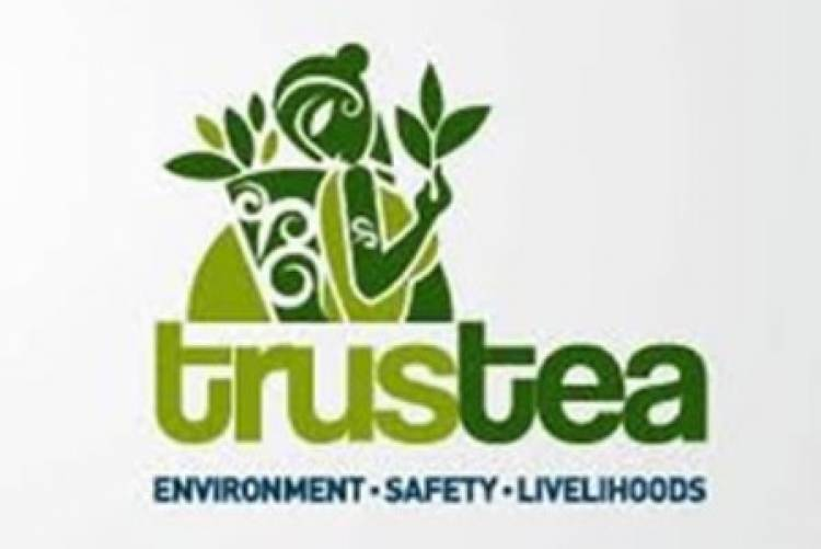 Trustea verifies over 608 million kgs of domestic tea as sustainable and safe