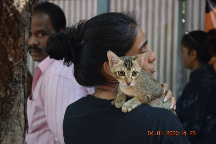 Pet Adoption Drive on February 22nd and 23rd,2020